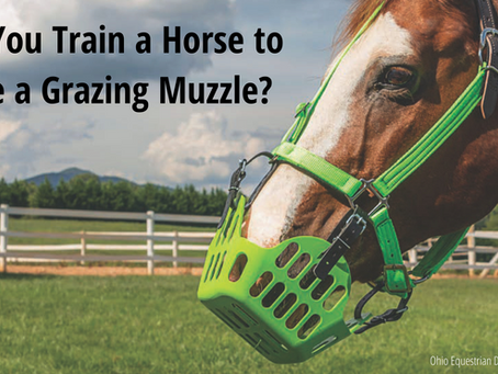 Can You Train a Horse to Use a Grazing Muzzle?