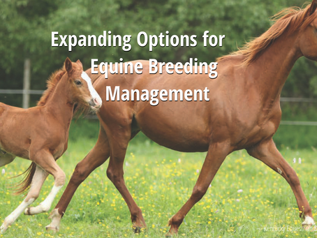 Expanding Options for Equine Breeding Management
