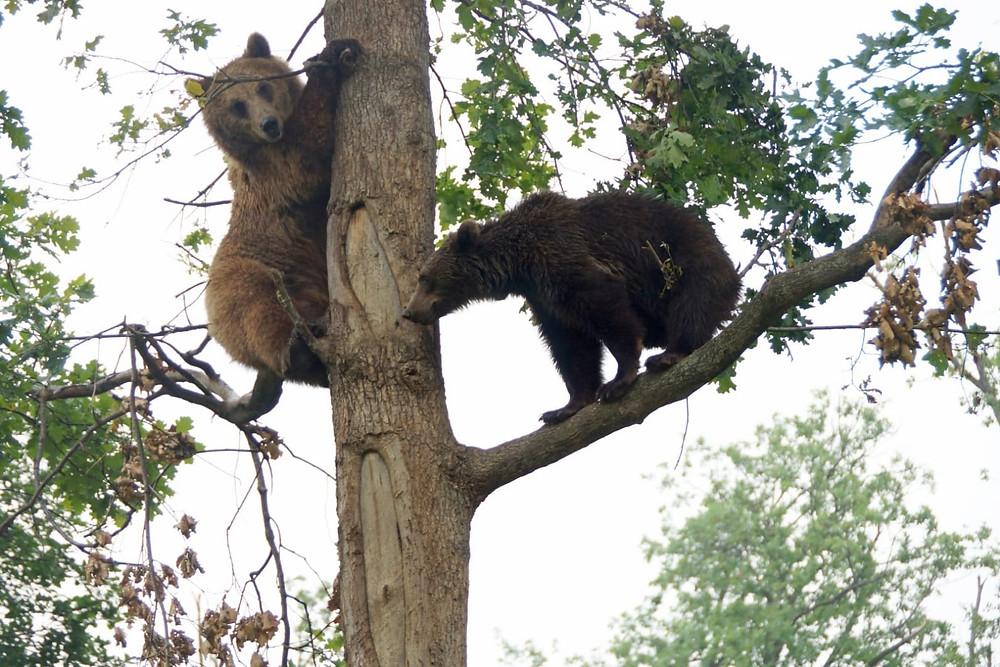 אמא דובה ובתה..