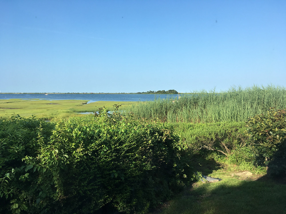 View from our rented cottage in Martha's Vineyard.