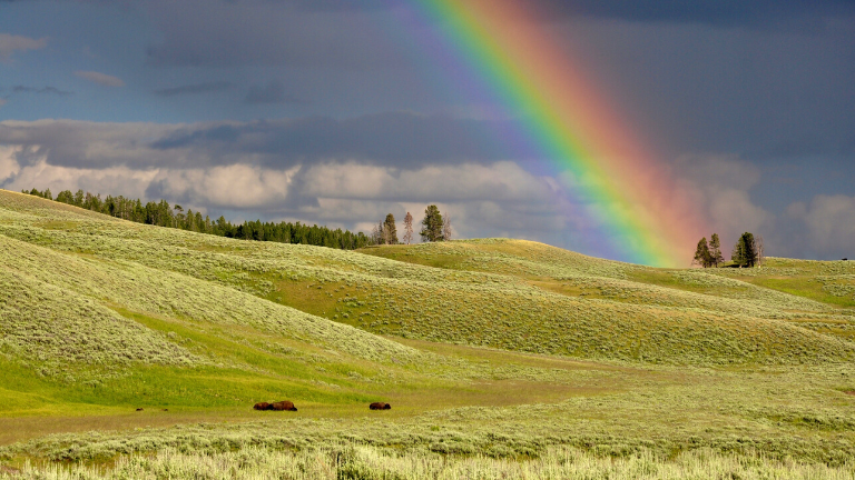 Rainbow over grassy green fields