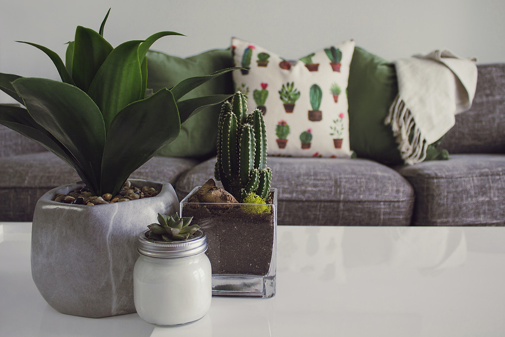 three white and gray succulent plants