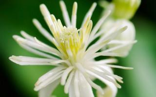 Les Fleurs de Bach et les élixirs minéraux accompagnent votre ressourcement estival