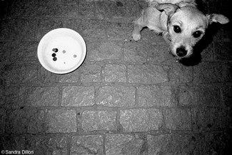 Prague_BeggarDog.jpg
