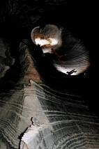 סנפלינג במערת הקולונל