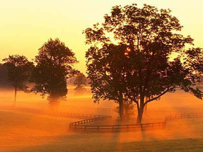 mini-Horse Farm Sunrise, Versailles, Kentucky.jpg