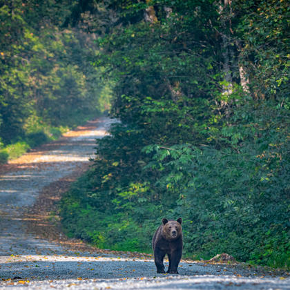 Grizzly Bear Viewing and Wildlife Photography