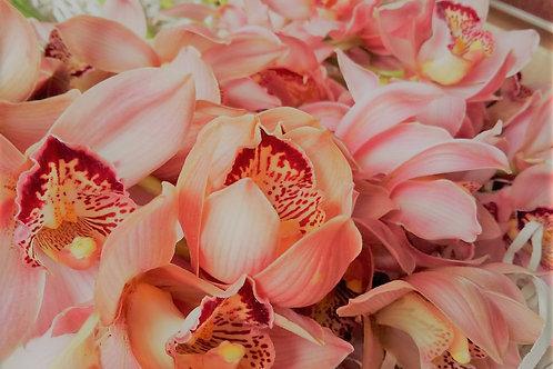Standard Pink Cymbidium Orchid
