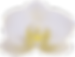 kisspng-orchids-floren-flower-phalaenops