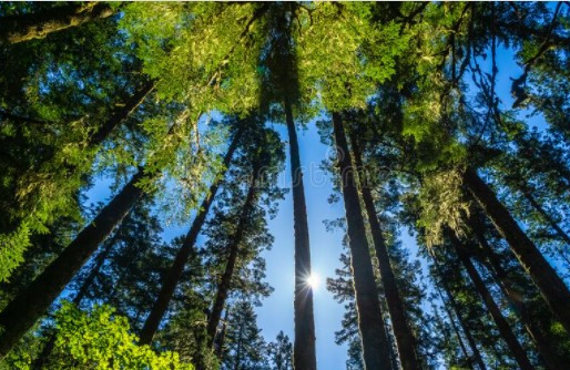 Van radicale naar rationele ecologie