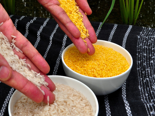 Met de komst van gouden rijst breekt een nieuw tijdperk aan