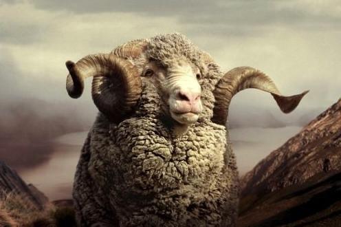 Deux Pas Vers l'Autre - Merino wool