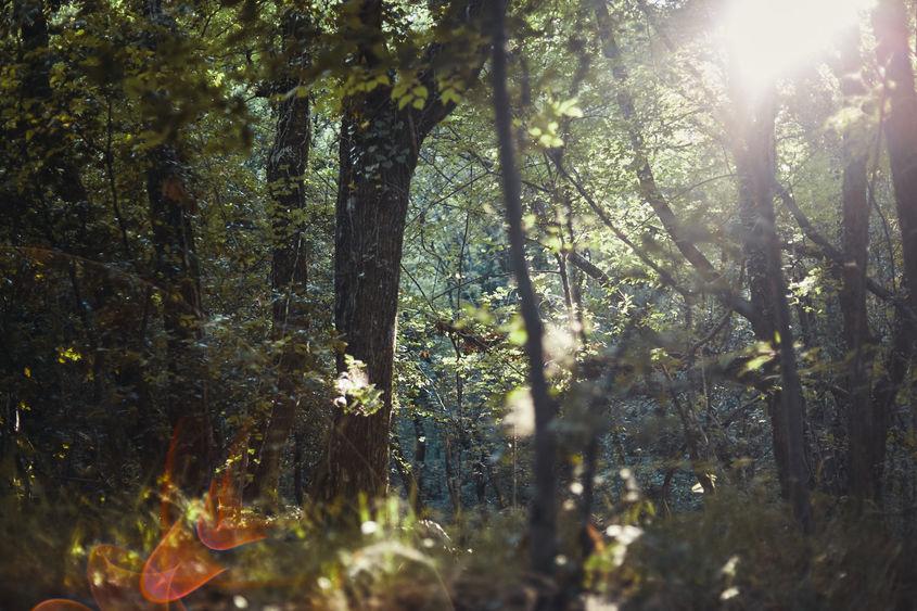 Lumière sur la forêt