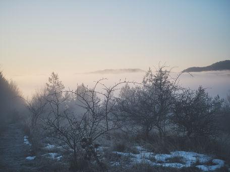 2PVA -  BULGARIA - 1462 -janv. 13 2020.j