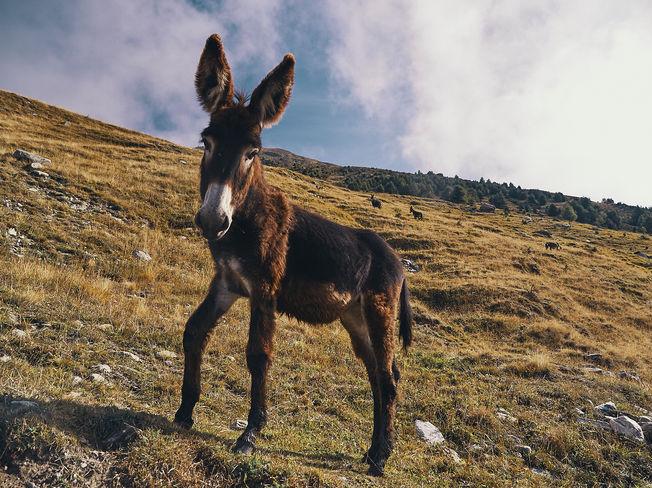deux pas vers l'autre, 2PVA, thru-hike europe, ultralight hiking trip, europe, switzerland, alps, upper valais, donkey