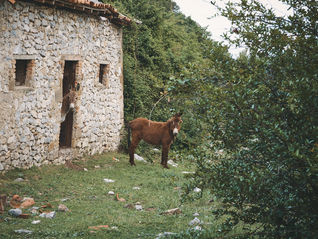 2PVA - ALBANIA - avr. 28 2019 - 3984.jpg