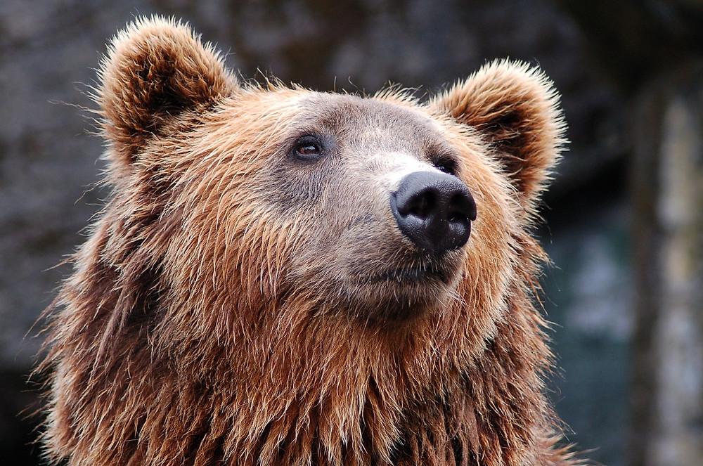 Deux Pas Vers l'Autre - Bear