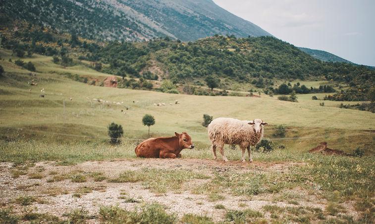 2PVA ALBANIA - juin 17 2019 - 155791.jpg