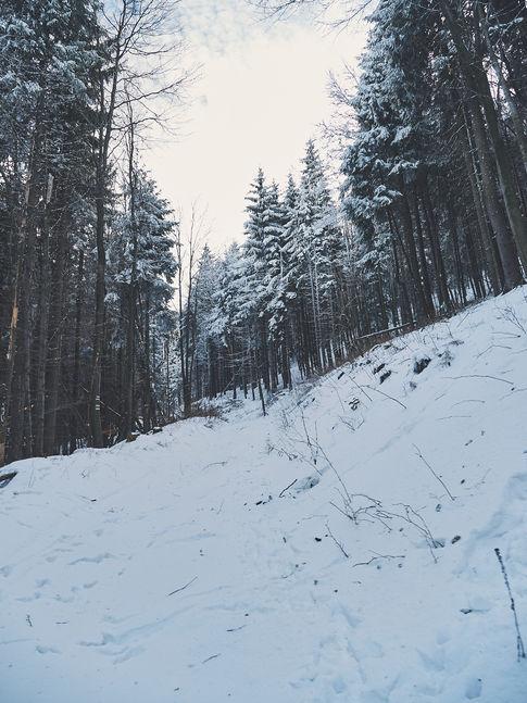 2PVA -  BULGARIA - 1264 -janv. 09 2020.j