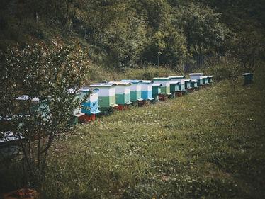2PVA - ALBANIA - avr. 28 2019 - 3937.jpg