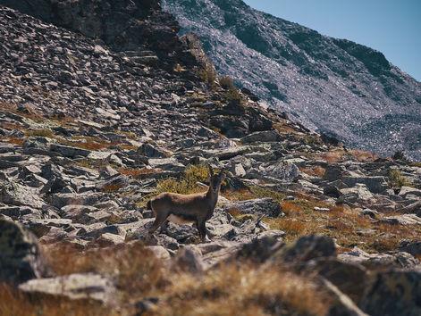 deux pas vers l'autre, 2PVA, thru-hike europe, ultralight hiking trip, europe, switzerland, alps, upper valais, chamois