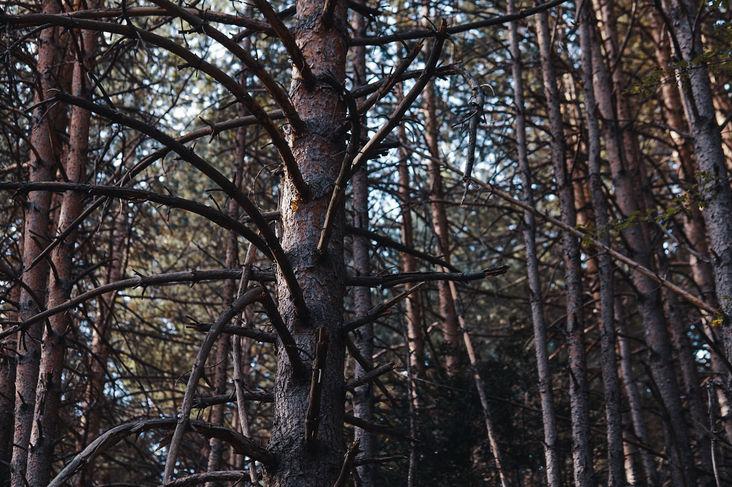 Une échelle de bois