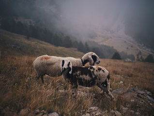 deux pas vers l'autre, 2PVA, thru-hike europe, ultralight hiking trip, europe, switzerland, alps, upper valais, sheeps