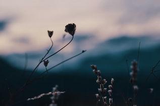 Fleurs du soir
