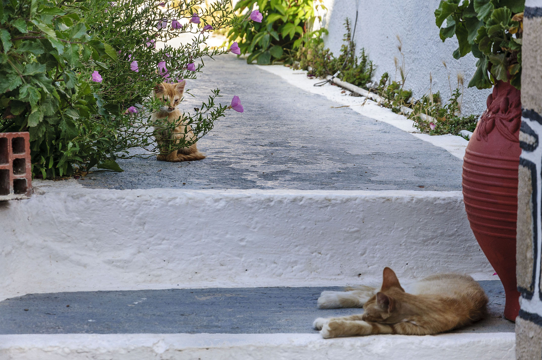 there are cats in the gardens