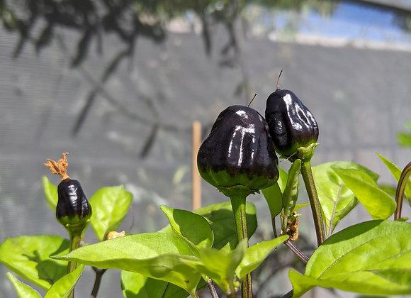 Mini Black UFO