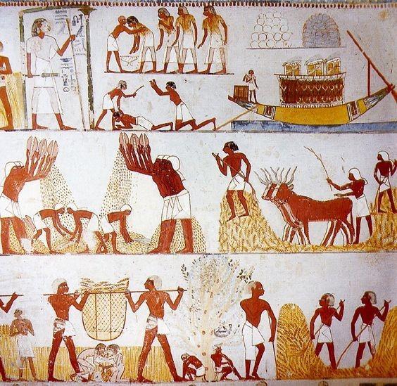 Escenas del cultivo de legumbres en Egipto