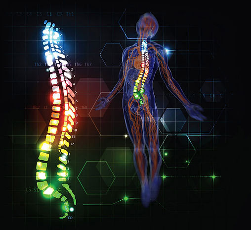 Spinal Column and Nervous System