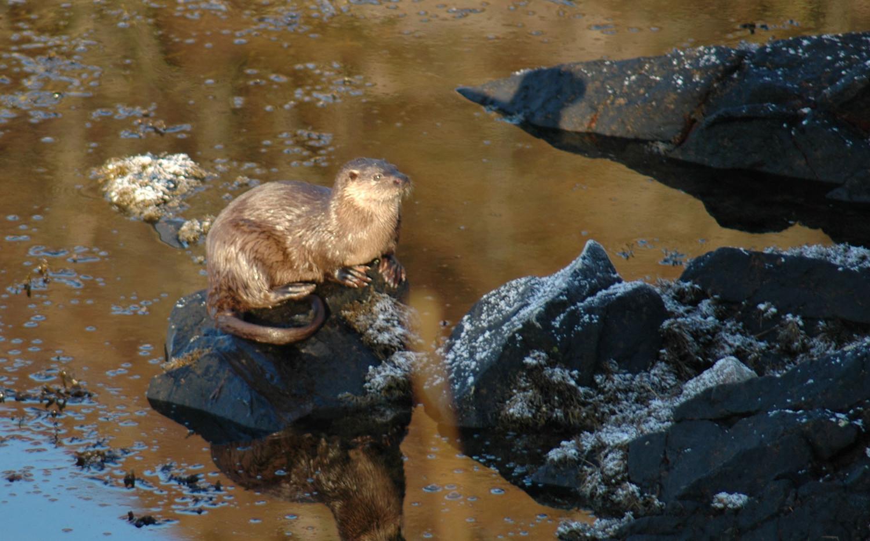 Otter-sunbathing.jpg