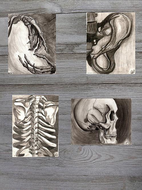 Skeletal Series
