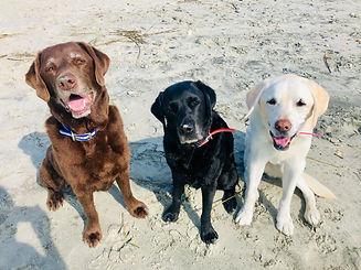 Dogs pic.jpg