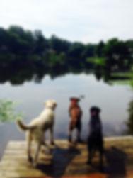 Dogs photo.JPG