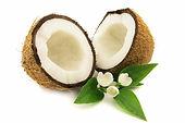 11_Coconut.jpg