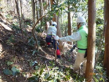 針葉樹林での間伐