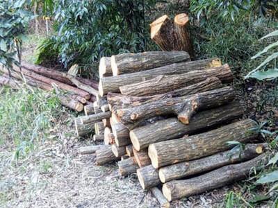 春伐り、大径木のきざみ入れや短ホダ化