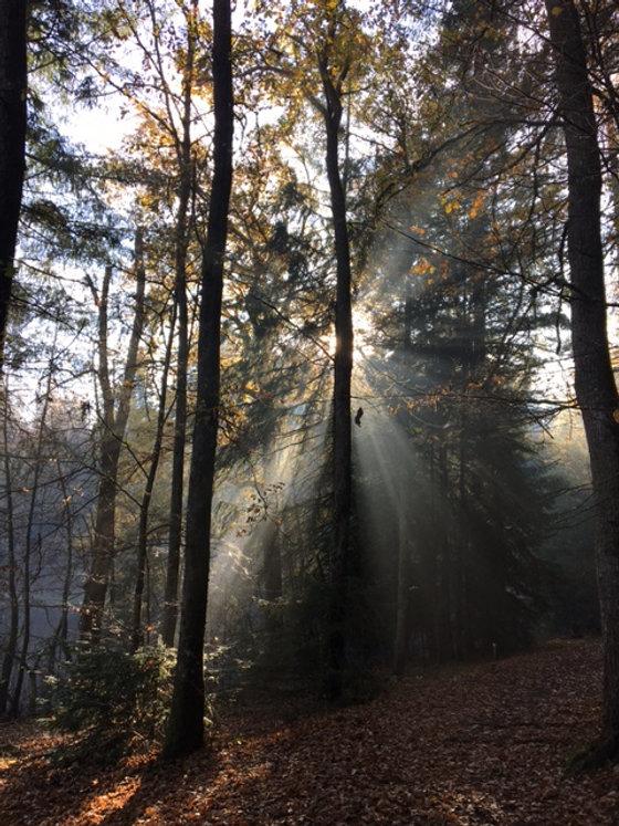 Arbres forêt.JPG