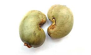 Raw Cashew Senegal, West Africa