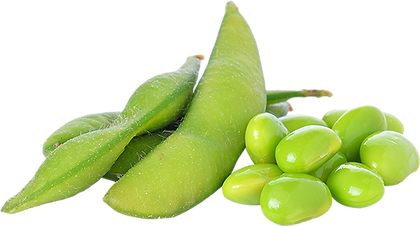 soybean_edamame_better.png