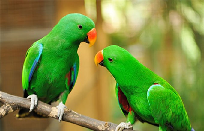 Green  parrots_edited.jpg