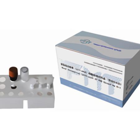 RT-PCR Detection Kit