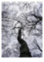Trees Highgate3.jpg