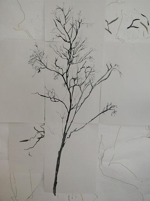 Silver Birch, Oxhey Woods November 2019