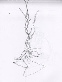 Seymour= 2nd Tree