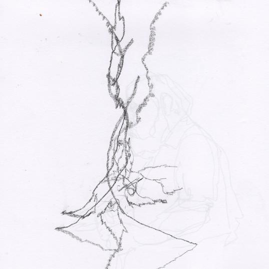 Seymour= 2nd Tree.jpg