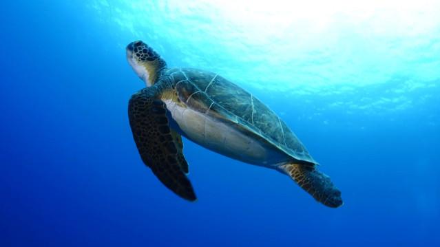 WWF Tartaruga