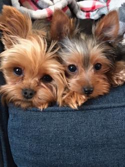 Winston & Chloe